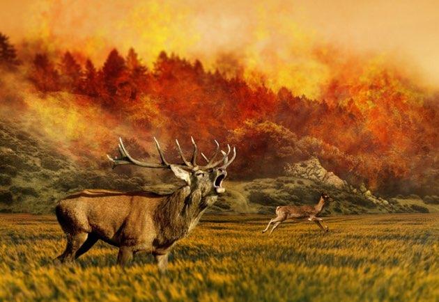 山火事と鹿